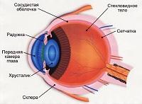Наружная часть глазного яблока
