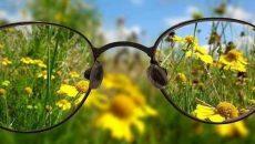 Очки и растение
