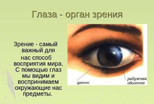 Строение глаз